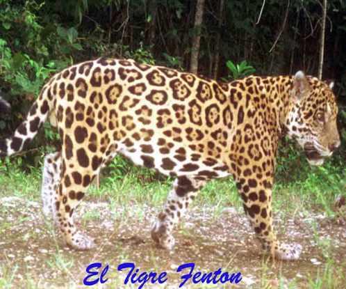ElTigreFenton-Belize-CMiller-Titled-Web